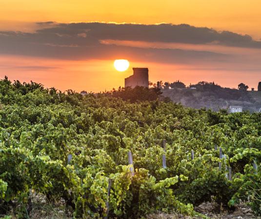 Le vignoble de Châteauneuf-du-Pape @ Kessler G.