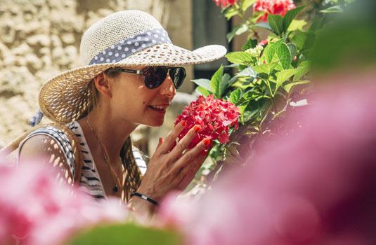 Fleurs en Provence @ Coquard M.