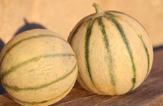 Melons de Cavaillon @ Gillet V.