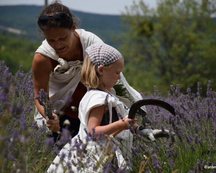 10 expériences à vivre en Provence